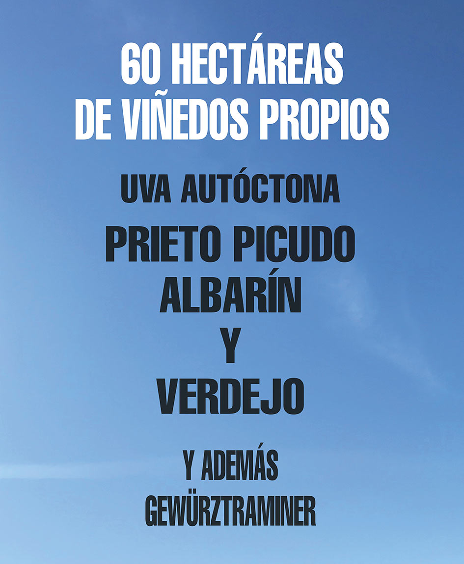 meoriga_vinedos_01